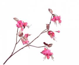 BLOEM   Fuchsia Beauty