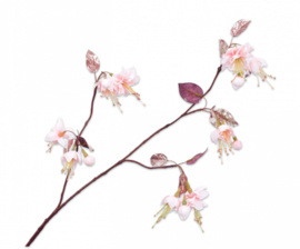 BLOEM   Fuchsia