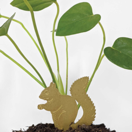 Planthanger Eekhoorn