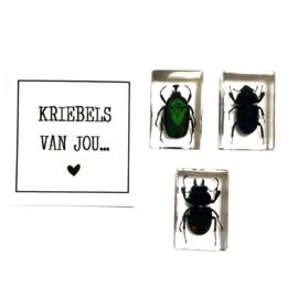 Kever Kriebels Van Jou
