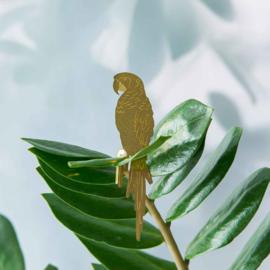 Planthanger Papegaai