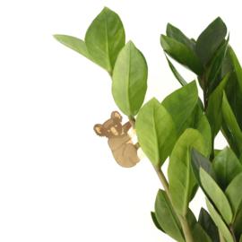 Planthanger Koala
