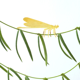 Planthanger Libelle