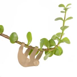 Planthanger Luiaard