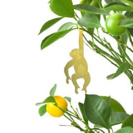 Planthanger Chimpansee