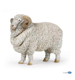 mouton mérinos schaap 51174