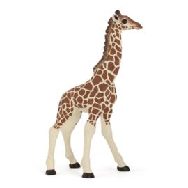 giraf kalf 50100
