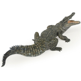 crocodile du nil 50055