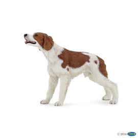 Betroense jachthond 54024