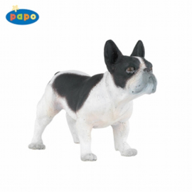 Franse bulldog 54006