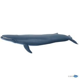 blauwe walvis 56037