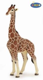 giraf stier 50149