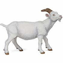 chèvre blanche 51144