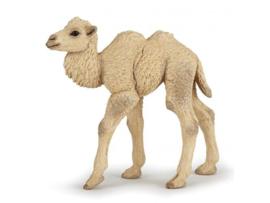 kameel kalf 50221