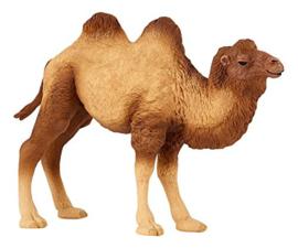 kameel 50129