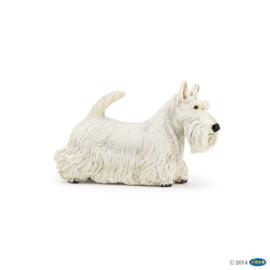scottish terrier blanc 54028