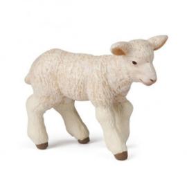 agneau mérinos 51047