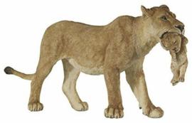 leeuwin 50043