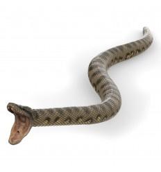 anaconda 50258