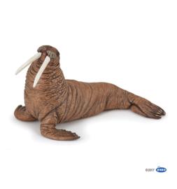 walrus 56030