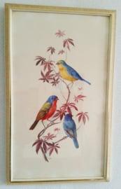 Vintage schilderij vogels