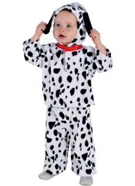 Dalmatiër baby