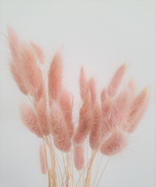 Bunny Pink