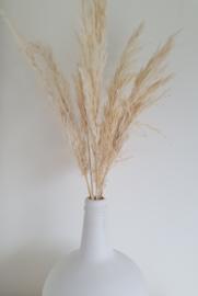 Pampas grass White