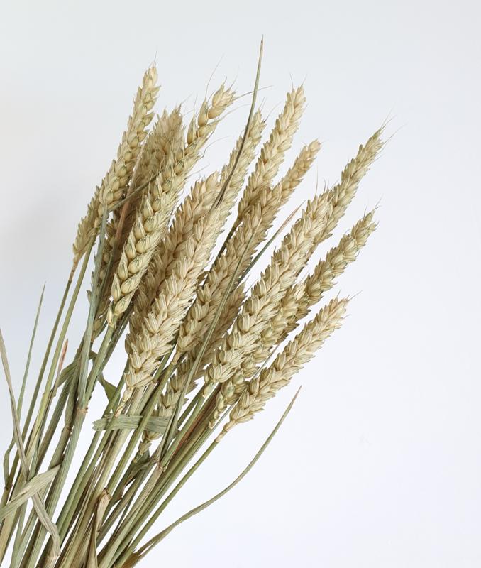 Droogbloemen Grain