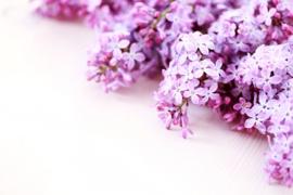 1 ltr. Seringen parfum voor verstuiver