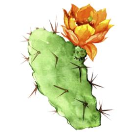 1 ltr. Cactus parfum voor verstuiver