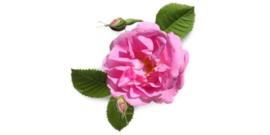 1 ltr. Rozen damascena parfum voor verstuiver