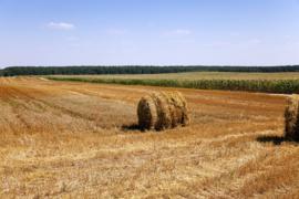 1 ltr. Gemaaid gras opgietconcentraat - EXTRA GECONCENTREERD