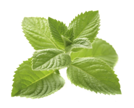 1 ltr. Indian mint etherische olie voor verstuiver