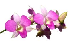 1 ltr. Orchidee parfum voor verstuiver