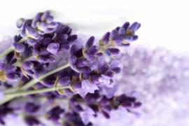 1 ltr. Lavendel opgietconcentraat - EXTRA GECONCENTREERD
