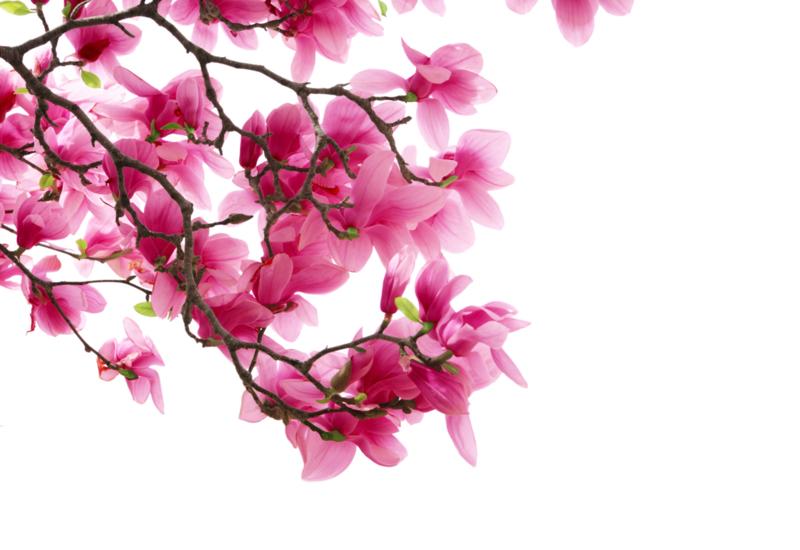 1 ltr. Magnolia parfum voor verstuiver