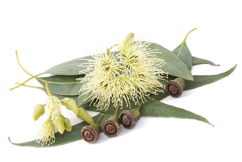 1 ltr. Eucalyptus-mint etherische olie voor verstuiver
