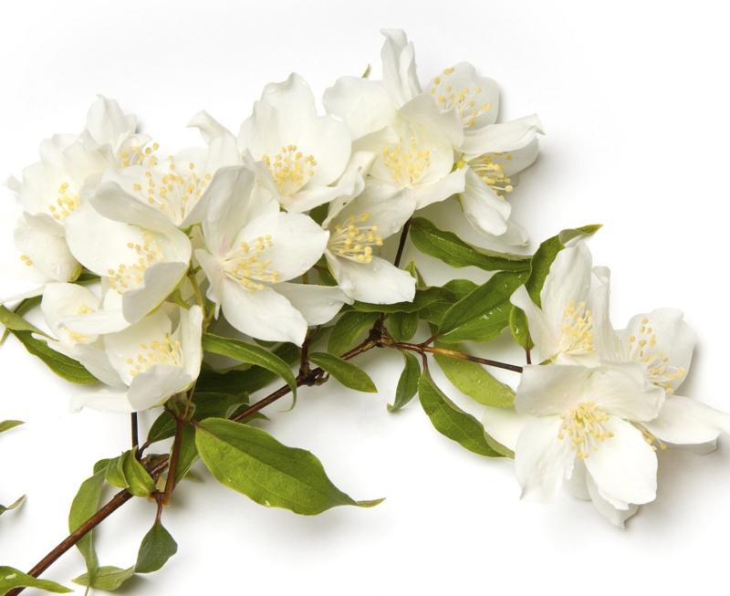 1 ltr. jasmijn parfum voor verstuiver