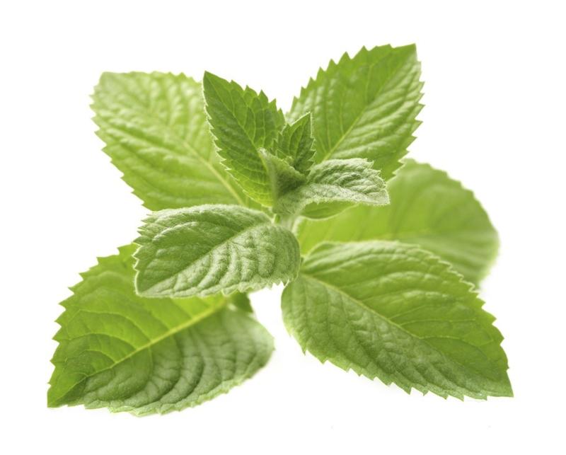 1 ltr. Mint voordeel etherische olie voor verstuiver