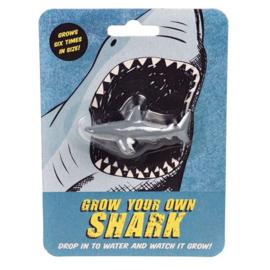 Grow your own shark
