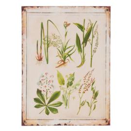 Schilderij plant