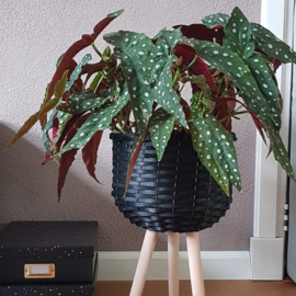 Willow stand planter black