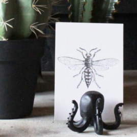 Octopus zwart