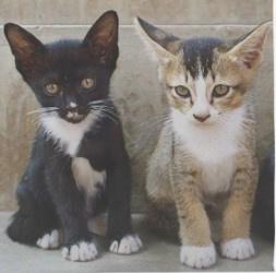 Servetten kittens