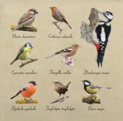 Servetten vogels