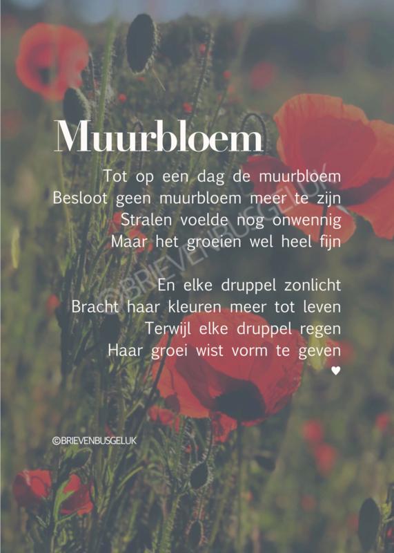 Muurbloem - A6