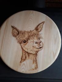 Wandbord rond alpacakop nr 3