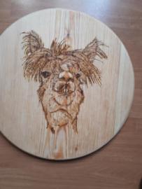 Wandbord rond alpacakop nr 2