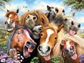 Paarden Selfie.  Metalen wandbord 40 x 30 cm.